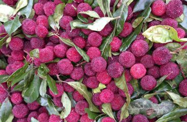 Những trái ngon từ núi rừng Tây Bắc